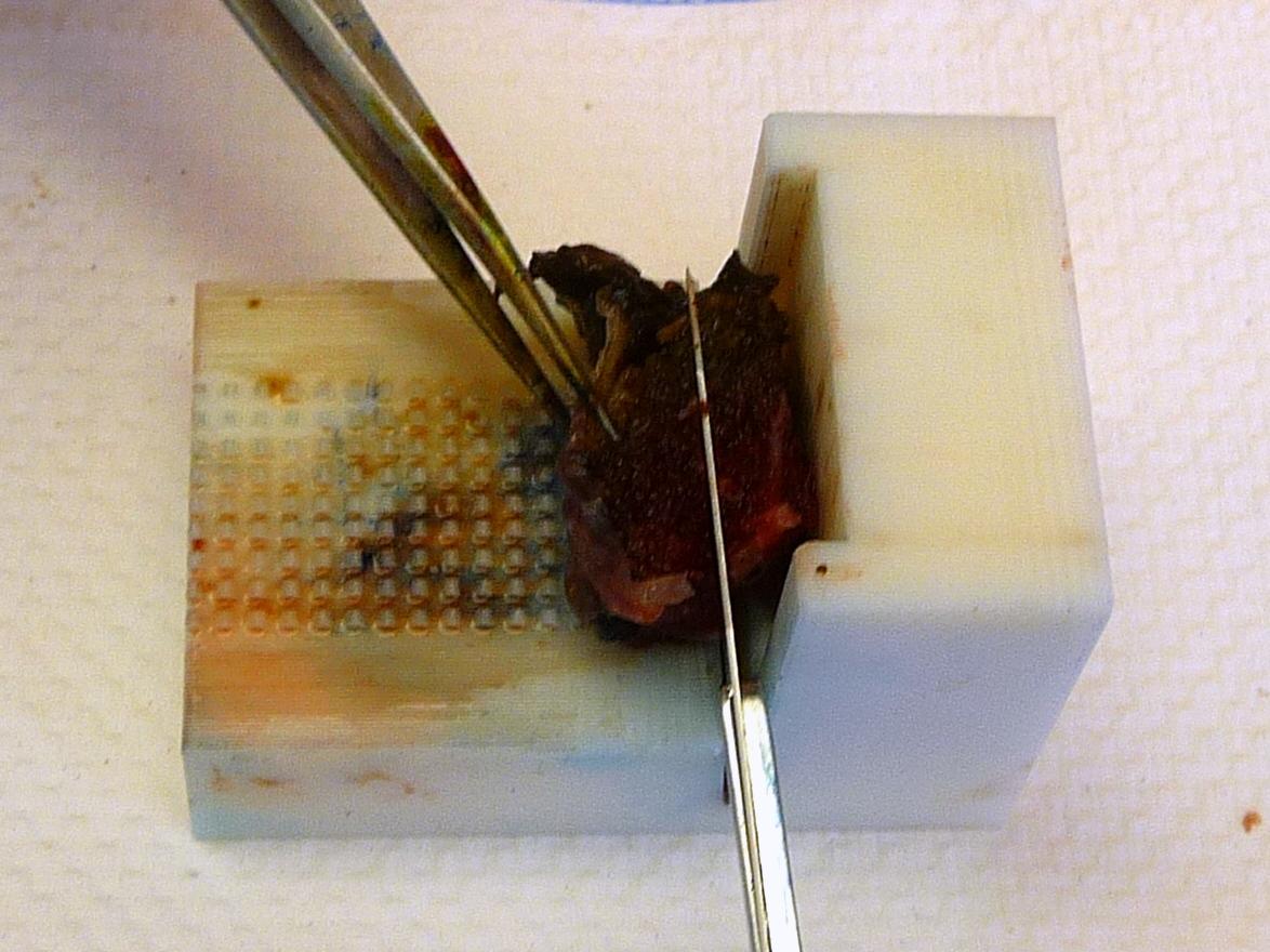 BUSMilestonePrototype